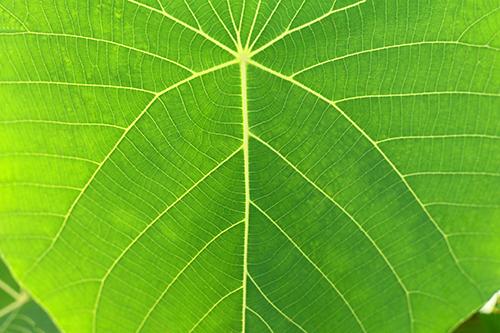 おおきな南国の葉っぱのフリー写真素材(商用可)