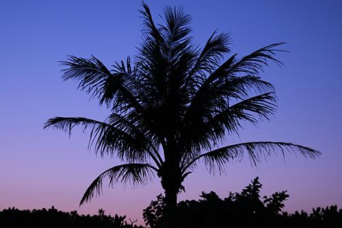 ヤシの木のシルエットと夕暮れの美しいグラデーションのフリー写真素材(商用可)