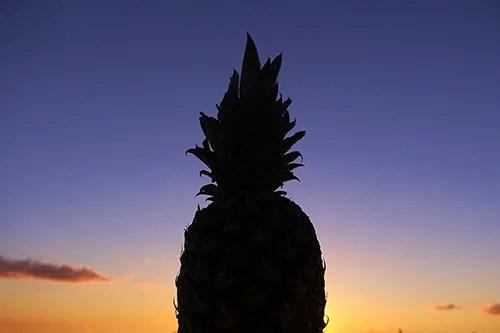 美しい夏の夕焼けを背にそびえ立つパイナップル先輩のシルエットのフリー写真素材(商用可)