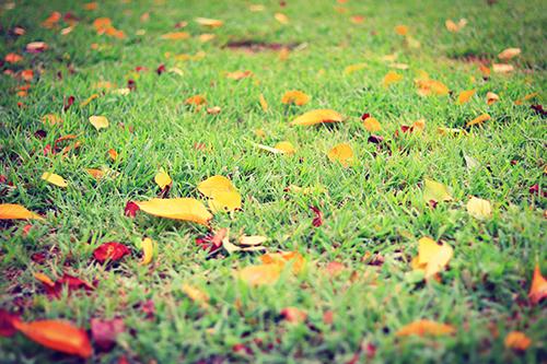 芝生に落ちたカラフルな落ち葉たちのフリー写真素材(商用可)