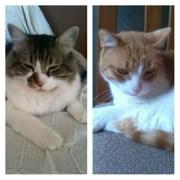 Petit i Tigre en adopció conjunta