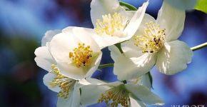spring-flowers-1370683-639x484