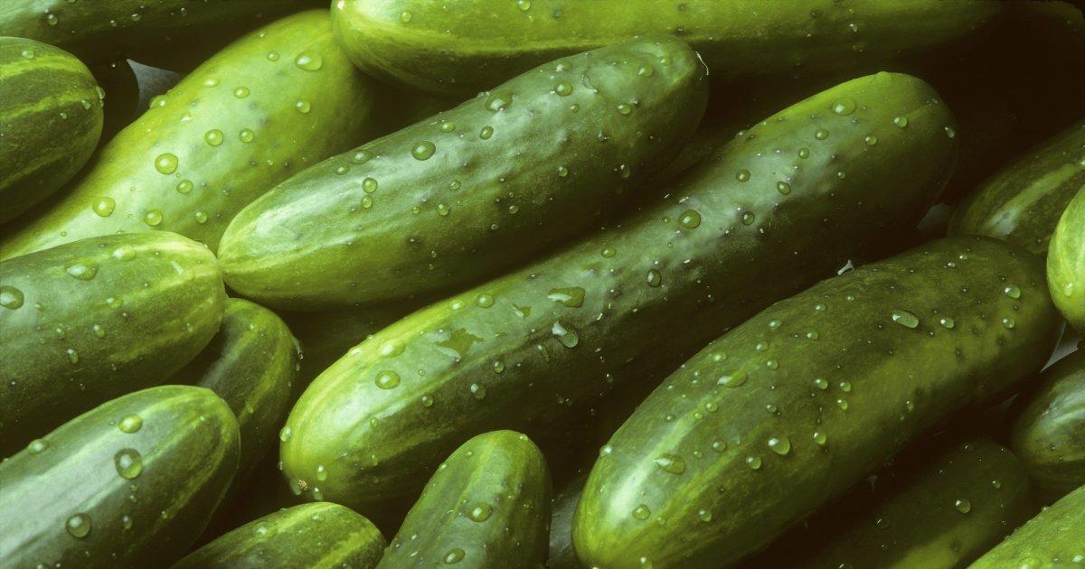 These are neither penii or penises. They're cucumbers. Remember this well.