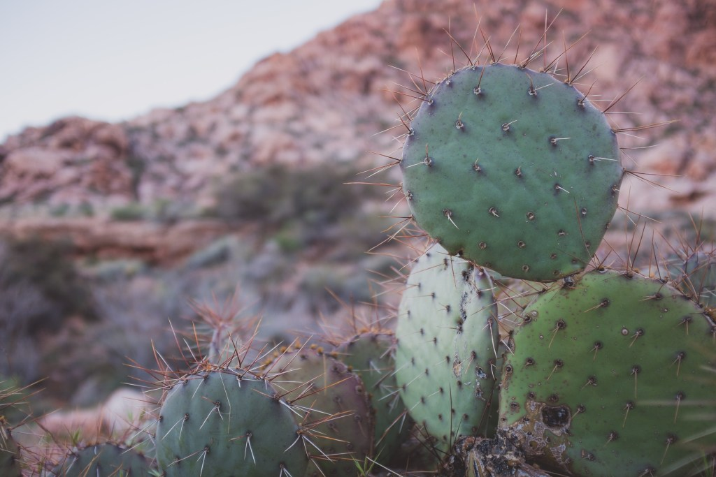 Prickly pear shaped