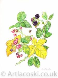 Portfolio: Bramble Berries with Wasp