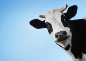 корова picsfab.com