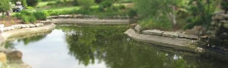 Arboretum Tilt Shift 2