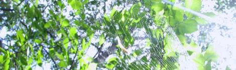 Sun rays on an empty web