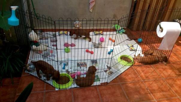 Los cachorros de Boira