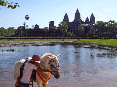 angkor wat and horse