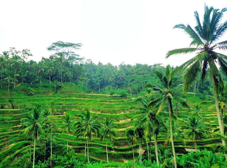 Spiritual bali global gallivanting travel blog for Terrace ubud bali