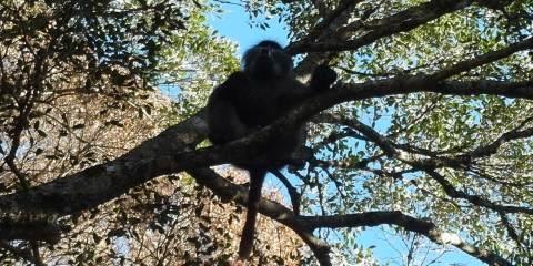 Pacino-tree-2