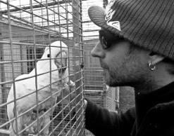 Parrot Love in ZA