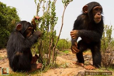 Chimpanzee Conservation Center