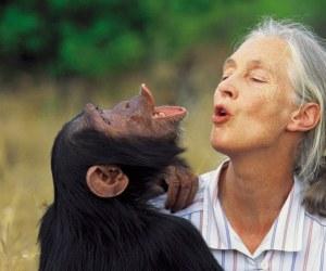 Jane Goodall Interview
