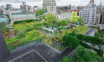 Green Rooftop Garden