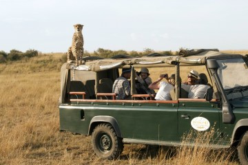 A cheetah gains a better view by jumping on the top of a safari vehicle in the Masai Mara, Kenya. (Ed Brown/Rex Features via AP Images)
