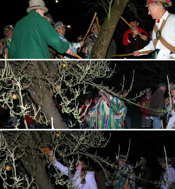 From top to bottom: Beat the evil out of the apple tree with sticks, Sprinkle the roots with wassail, and have a pure person hang cider soaked toast from the tree (the toast will soak up any remaining evil from the tree, which the birds will then eat and carry away. It all ends with singing! Photos by Glyn Baker