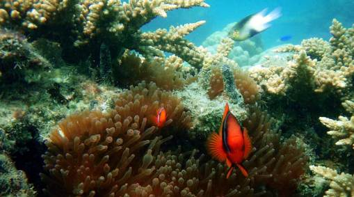 Thailand Reefs & Rainforests