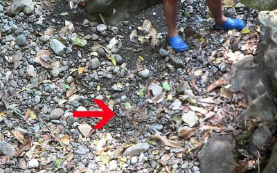 Panama with Kids: Trapped in a cave by a deadly snake!