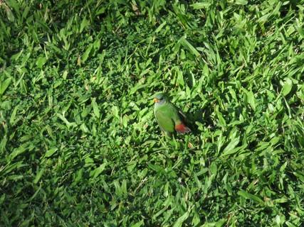 bird wildlife