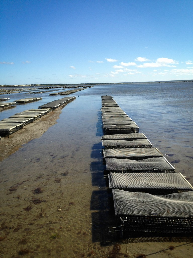 farms- oyster farm II