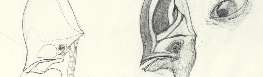 Caiuahara Dobruskii heads sketch Header