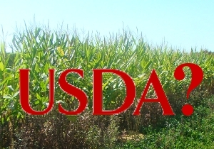usda_corn_question_2