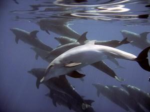 dolphins Morales Fallon