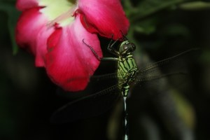 insect-1173234_960_720