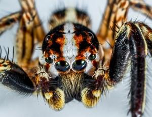spider Morales Fallon