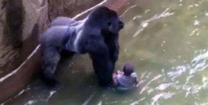 gorila harambe zoológico Morales Fallon