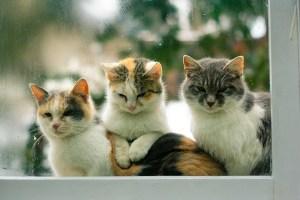 cats Morales Fallon