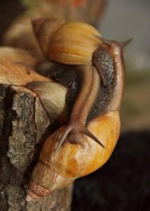snails Morales Fallon