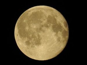 luna Morales Fallon