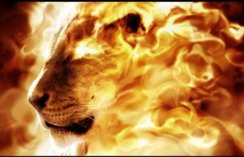 Tribe of Judah lion 4 Lost Tribe of Judah Found: The Scattered Children of Bab El