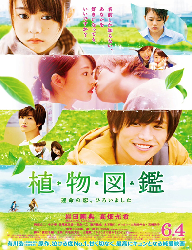 Poster de Evergreen Love