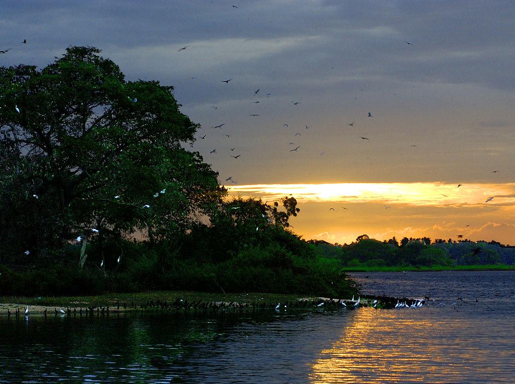1024px-Wildlife_Preserve_Near_Kirinda,_Sri_Lanka