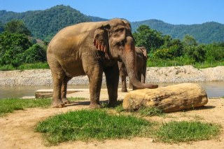 Spotlight on Thailand's Elephant Tourism