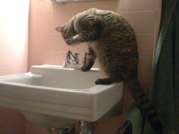 Hogging the bathroom sink