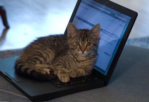 Laptop Kitten