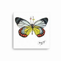 Small Of Butterfly Wall Decor