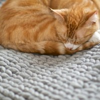 Anette Lebenslustiger Katze