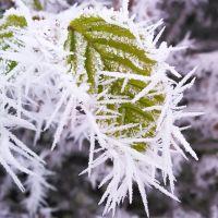 Raureif, Nadelfrost, seltenes Naturschauspiel