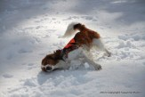 Toni Rolling In The Snow