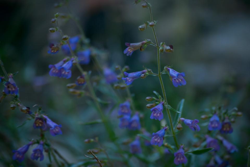 My Philosophy | Golden State Botanicals