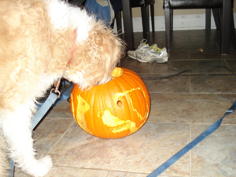 Especial Pumpkin Dog Treats Pumpkin Dog Treats Gone A Walk How Much Pumpkin To Give A Dog Per Day How Much Pumpkin To Give A Big Dog bark post How Much Pumpkin To Give A Dog