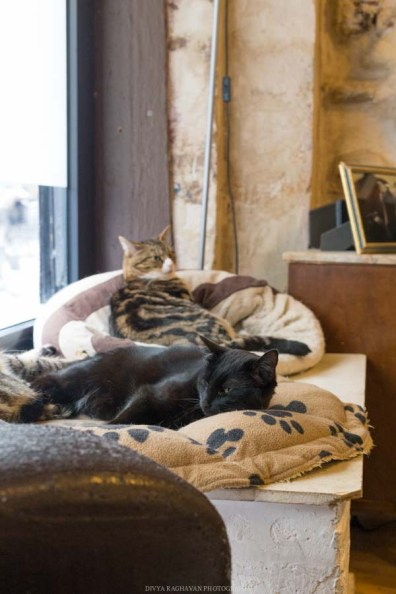 Le cafe des chats, Paris-12