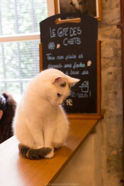 Le cafe des chats, Paris-6