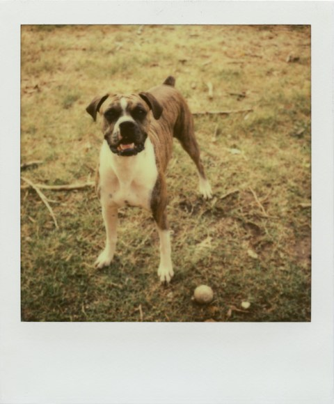 Impossible Project PX70-V4B Anti-Opacifiation Test Film - Polaroid SX-70